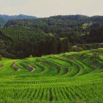 東京から一番近い棚田、千葉県鴨川市のなごみスポット「大山千枚田」